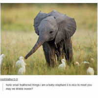 Hello, Memes, and Elephant: mothfather3-0  hello small feathered things i am a baby elephant it is nice to meet you  may we shake noses? the most gentle boop - Max textpost textposts