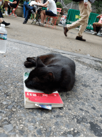 Manhattan, May, and Dis: Mothine You Dis may  thin  ede A catnap in midtown Manhattan at 5pm.