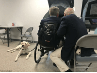 "Friends, Memes, and Twitter: motion  Twitter/Jim McGrath Former President George H.W. Bush voted today accompanied by ""his two best friends""— his service dog Sully and Jim Baker, according to Bush's spokesman Jim McGrath."
