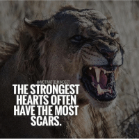 An easy life never made a tough person! | MotivatedMindset: @MOTIVATED.MINDSE  THE STRONGEST  HEARTS OFTEN  HAVE THE MOST  SCARS An easy life never made a tough person! | MotivatedMindset