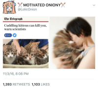 Kittens, Telegraph, and The Telegraph: MOTIVATED ONIONY  @LolicOnion  The Telegraph  Cuddling kittens can kill you,  warn scientists  share  11/3/16, 8:08 PM  1,393 RETWEETS 1,103 LIKES