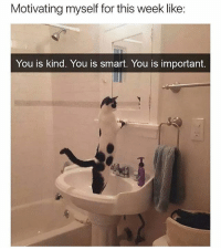 Memes, Best, and Tag Someone: Motivating myself for this week like:  You is kind. You is smart. You is important. Tag someone that could use a little motivation.. @girlsthinkimfunny is one of the best accounts out there @girlsthinkimfunny @girlsthinkimfunny