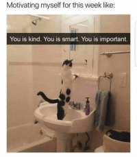 Memes, 🤖, and Smart: Motivating myself for this week like:  You is kind. You is smart. You is important. https://t.co/g4EsWcl1AT