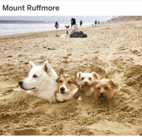 Funny, Meme, and Best: Mount Ruffmore @DrSmashlove is the BEST dog meme page and his captions are hilarious! 😂