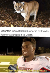 Meirl: Mountain Lion Attacks Runner in Colorado,  Runner Strangles It to Death  They had us in he  h not gonna lie Meirl