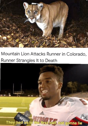 Dank, Memes, and Target: Mountain Lion Attacks Runner in Colorado,  Runner Strangles It to Death  They had us in he  h not gonna lie Meirl by TheToast-it-Note MORE MEMES