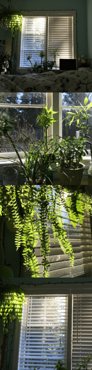 Tumblr, Blog, and House: mouzeron:I hope you enjoy the sunshine today my dear house plants.
