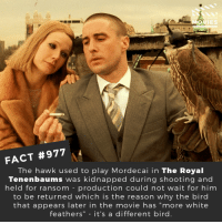 "Memes, Movies, and Movie: MOVIES  FACT #977  The hawk used to play Mordecai in The Royal  Tenenbaums was kidnapped during shooting and  held for ransom -production could not wait for him  to be returned which is the reason why the bird  that appears later in the movie has ""more white  feathers"" - it's a different bird. What is your favorite Wes Anderson movie?🎬🎥 • • • • Double Tap and Tag someone who needs to know this 👇 All credit to the respective film and producers. Movie Movies Film TV Cinema MovieNight Hollywood wesanderson theroyaltenenbaums gwynethpaltrow royaltenenbaums"