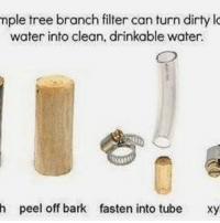 Mple Tree Branch Filter Can Turn Dirty Water Into Clean Drinkable H L Off Bark Fasten Xy New Study Shows How To Make Safe Drinking