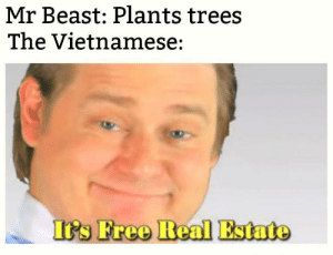 The trees are speaking in Vietnamese: Mr Beast: Plants trees  The Vietnamese:  It's Free Real Estate The trees are speaking in Vietnamese