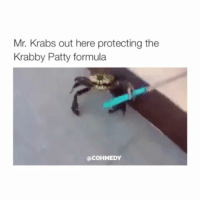 Mr. Krabs, Krabby Patty, and Girl Memes: Mr. Krabs out here protecting the  Krabby Patty formula  COHMEDY WHY DIDNT HE JUST KICK IT