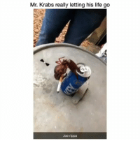 This what happens when you go from being a popular meme to a dead meme also.. . Crabs often work together to get food and to protect their families. There are about 5,000 species of crabs. But only about 4,500 are true crabs 🦀: Mr. Krabs really letting his life go  Joe rippa This what happens when you go from being a popular meme to a dead meme also.. . Crabs often work together to get food and to protect their families. There are about 5,000 species of crabs. But only about 4,500 are true crabs 🦀