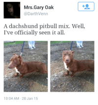 pursuitofhapppinessss:  What the fuck  This can't be real😂😂😂: Mrs.Gary Oak  @DarthVenn  A dachshund pitbull mix. Well,  I've officially seen it all.  10:04 AM 28 Jan 15 pursuitofhapppinessss:  What the fuck  This can't be real😂😂😂