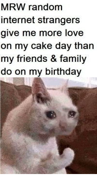 I just like the cat: MRW random  internet strangers  give me more love  on my cake day than  my friends & family  do on my birthday I just like the cat