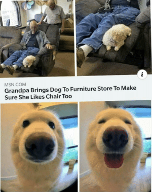 That so cute: MSN.COM  Grandpa Brings Dog To Furniture Store To Make  Sure She Likes Chair Too That so cute