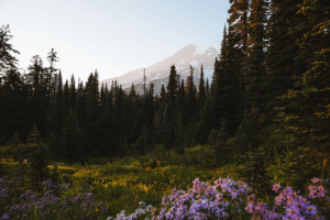 msteindl: I think about this place often // Mount Rainier, September 2018.    Instagram // @MattSteindl    : msteindl: I think about this place often // Mount Rainier, September 2018.    Instagram // @MattSteindl