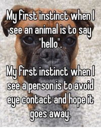 """Memes, Instinctive, and 🤖: Mu First instinct when  see an animalis to say  """"hello  MU First  instinct When  See a person isto avoid  eue contact and hope IG  goes away 2 FACTS"""