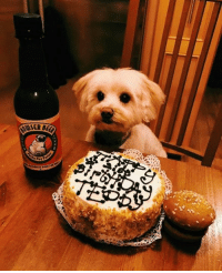 """""""My friends puppy just had his 21st birthday...""""   Wow!! Happy Birthday. 😊: mucscam """"My friends puppy just had his 21st birthday...""""   Wow!! Happy Birthday. 😊"""