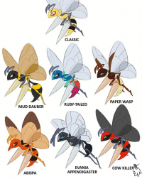 beedrill in different bee 🐝 forms by clearjello on tumblr pokemon art tumblr gaming kanto 90s instagram photo video anime: MUD DAUBER  ABISPA.  CLASSIC  RUBY-TAILED  EVANIA  APPENDIGASTER  PAPER WASP  COW KILLER beedrill in different bee 🐝 forms by clearjello on tumblr pokemon art tumblr gaming kanto 90s instagram photo video anime