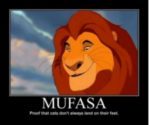 Cats, Wow, and Mufasa: MUFASA  Proof that cats don't always land on their feet. Wow…