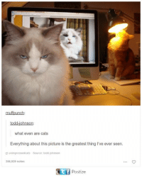 Cats, Memes, and 🤖: muffpunch  what even are cats  Everything about this picture is the greatest thing I've ever seen.  unimpressedcats  Source: todd-johnson  356,939 notes  Postize