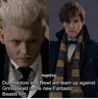 Dumbledore, Memes, and Film: mugglefacts  Dumbledore and Newt will team up against  Grindelwald in the new Fantastic  Beasts film qotd : are you excited for the new film? Is that even a question ahaha.