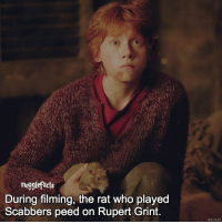 """qotd : comment """"😏"""" if you knew this and """"😱"""" if you didn't.: mugglefacts  During filming, the rat who played  Scabbers peed on Rupert Grint. qotd : comment """"😏"""" if you knew this and """"😱"""" if you didn't."""