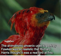 "Memes, Birds, and Phoenix: mugglefacts  The animatronic phoenix used to portray  Fawkes was so realistic that Richard  Harris thought it was a real bird at first. qotd : comment ""😏"" if you knew this and ""😱"" if you didn't. fc: 72,1k"
