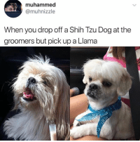 😂Damn: muhammed  @muhnizzle  When you drop off a Shih Tzu Dog at the  groomers but pick up a Llama 😂Damn