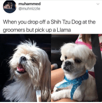 Memes, Animal, and 🤖: muhammed  @muhnizzle  When you drop off a Shih Tzu Dog at the  groomers but pick up a Llama @dogsbeingbasic is a must follow for all animal lovers!!