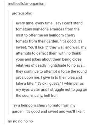 """I cant stand tomatoes: multicellular-organism:  roteusolm:  every time. every time l say l can't stand  tomatoes someone emerges from the  mist to offer me an heirloom cherry  tomato from their garden. """"It's good. It's  sweet. You'll like it,"""" they wail and wail. my  attempts to deflect them with no thank  yous and jokes about them being close  relatives of deadly nightshade to no avail  they continue to attempt o force the round  orbs upon me. I give in to their plea and  take a bite. """"It's ok I guess,"""" I whimper as  my eyes water and I struggle not to gag on  the sour, mushy, hell fruit  Try a heirloom cherry tomato from my  garden. It's good and sweet and you'll like it  по no no no no I cant stand tomatoes"""
