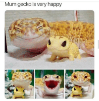 Happy, Smile, and Hope: Mum gecko is very happy Hope you smile like that too :)