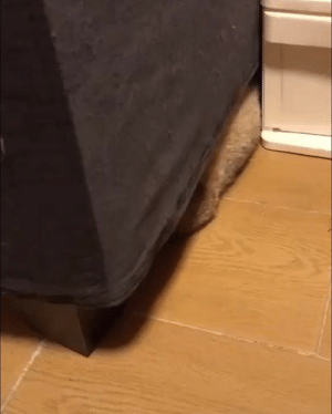 """""""Mum... there's something moving under the sofa."""": """"Mum... there's something moving under the sofa."""""""