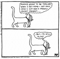Memes, The Gift, and 🤖: MUMMYS GOING TO BE THRILLED  WHEN I GET HOME.  NOT ONLY  HAVE I GOT HER A FRESHLY  CAUGHT PRESENT  ...BUT, ITS STILL  ALIVE!  FACEBOOK.COM ON THE PROWL  CAT CARTOONS  RF The Gift... #Cats #Ontheprowl #Rupertfawcett