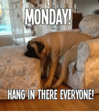Hang in there, guys!: MUNDA!  HANG IN THERE EVERYONE! Hang in there, guys!