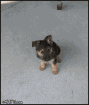 musicalabby-2112:  negative-g:  oneofthefew:  skittle-happy-matt:  Somebody took a picture of their dog everyday for a year kinda like that video on YouTube and it's so cute :3  PUPPY TURNS INTO A DOGGY!  Cutest gif in the world  this is my favorite gif ever: musicalabby-2112:  negative-g:  oneofthefew:  skittle-happy-matt:  Somebody took a picture of their dog everyday for a year kinda like that video on YouTube and it's so cute :3  PUPPY TURNS INTO A DOGGY!  Cutest gif in the world  this is my favorite gif ever