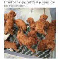 Bruh LOL!: must be hungry, but these puppies look  like fried chicken... Bruh LOL!