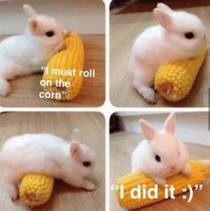 "Cute, Reddit, and Rabbit: "" must roll  on the  35  corn  Idid it)"" awwww what a cute do..rabbit"