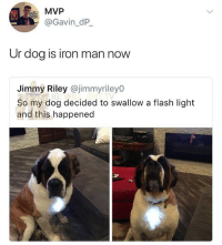 Damn: MVP  @Gavin_dP  Ur dog is iron man now  Jimmy Riley @jimmyriley0  So my dog decided to swallow a flash light  and this happened Damn