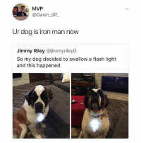 Do not, I repeat, DO NOT follow @drgrayfang if you're easily offended: MVP  @Gavin_dP  Ur dog is iron man now  Jimmy Riley @jimmyriley0  So my dog decided to swallow a flash light  and this happened Do not, I repeat, DO NOT follow @drgrayfang if you're easily offended