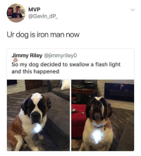 🤣lol: MVP  @Gavin_dP  Ur dog is iron man now  Jimmy Riley @jimmyrileyo  So my dog decided to swallow a flash light  and this happened 🤣lol