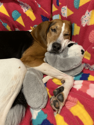 Animal, Sunday, and A Sunday: MW If you're not snuggling your favorite stuffed animal on a Sunday night are you even doing it right?