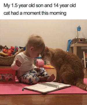 You can feel the love: My 1.5 year old son and 14 year old  cat had a moment this morming You can feel the love