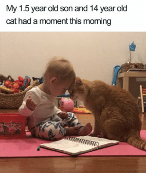 https://t.co/FwsgWZL6yt: My 1.5 year old son and 14 year old  cat had a moment this moming  ww https://t.co/FwsgWZL6yt
