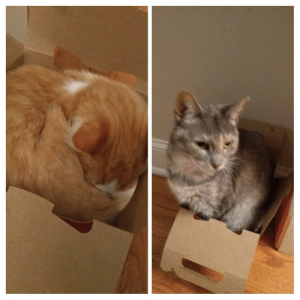 My 12 year old cat any my new kitten took turns with this takeout box. We saved it because they loved it.: My 12 year old cat any my new kitten took turns with this takeout box. We saved it because they loved it.