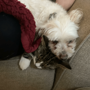 My 14 year dog and 3 year old cat sleeping.: My 14 year dog and 3 year old cat sleeping.