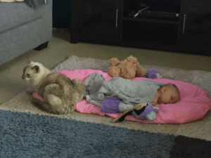 My 19 year old cat guarding my 2 month old daughter.: My 19 year old cat guarding my 2 month old daughter.