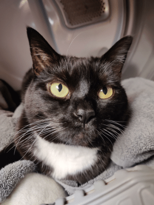 My 9yr old cat Tonks loves laying in the dryer after a load of towels.: My 9yr old cat Tonks loves laying in the dryer after a load of towels.