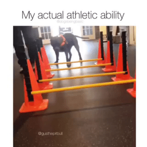 Instagram, Target, and Best: My actual athletic ability  dogsbeingbasic  @gusthepitbull His best! He did his best! via @gusthepitbull