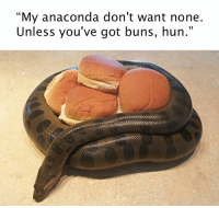 """Instagram: @punsonly Twitter: @puns_only: """"My anaconda don't want none.  Unless you've got buns, hun."""" Instagram: @punsonly Twitter: @puns_only"""